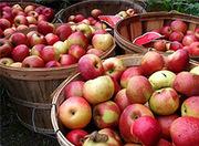 Линия для производства натурального фруктового уксуса,  яблочного уксус